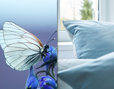 Bio Satin Bettwäsche hellblau in Schmetterlingsdesign mit Inspirationsvorlage Schmetterling